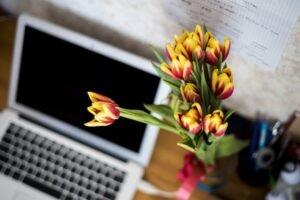 Cuidados no cultivo das flores dentro do ambiente de trabalho