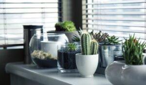 Prepare o ambiente para montar o jardim dentro de casa