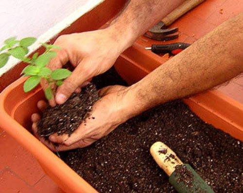 Utilizando o adubo em plantas