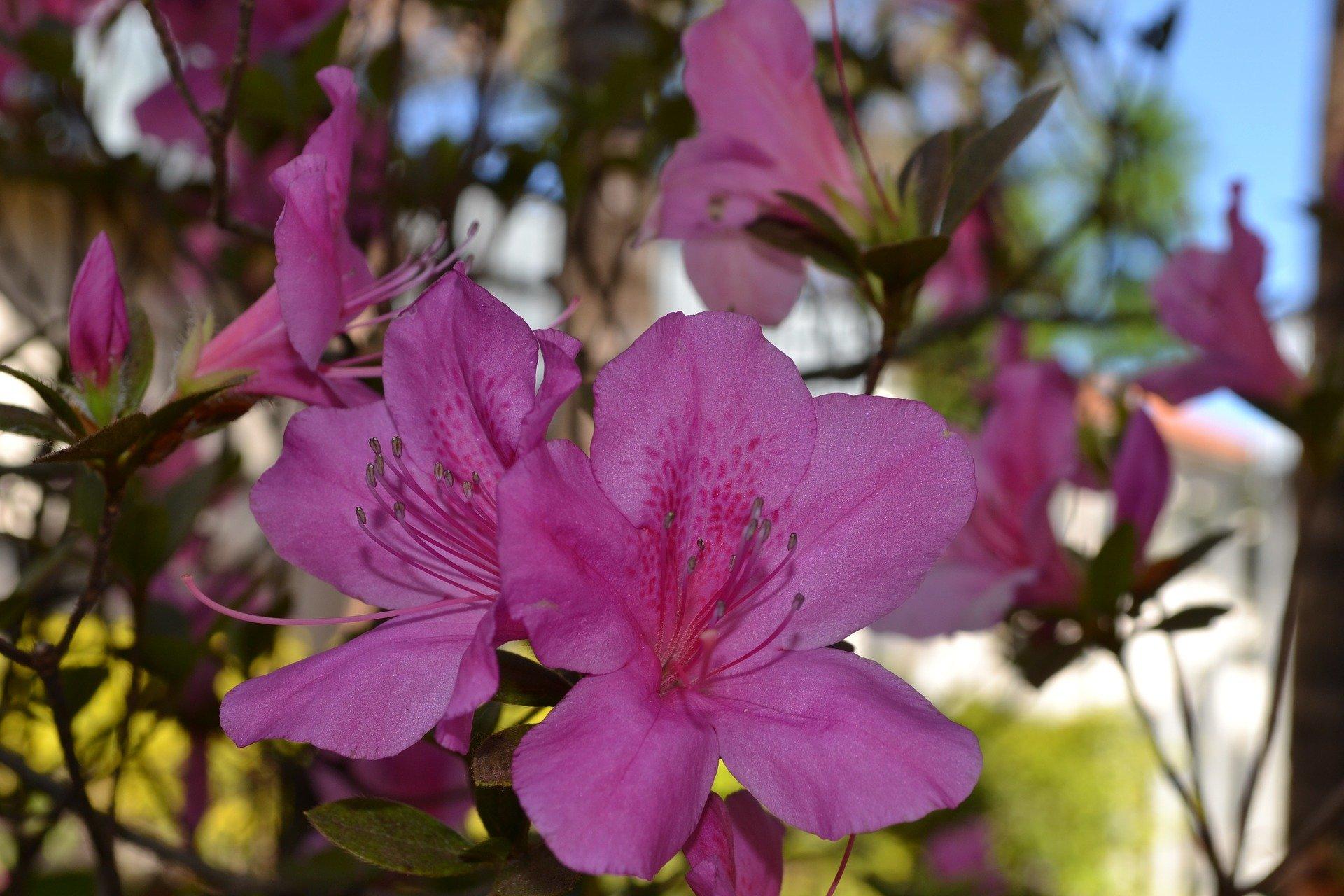 Flores de Inverno  Conheça as Flores que Deixam o Frio mais Colorido