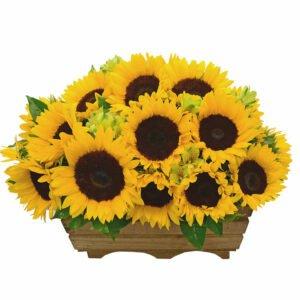 Caixote com flores de girassol