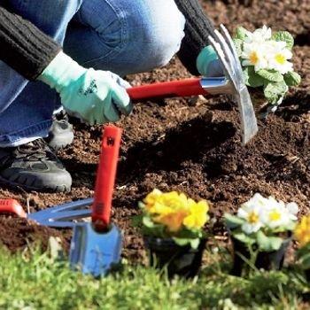 Adubo para plantas - Cuidando do jardim