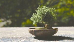 origem-do-bonsai