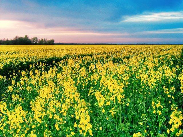 Qual o Significado dos Sonhos com Flores?