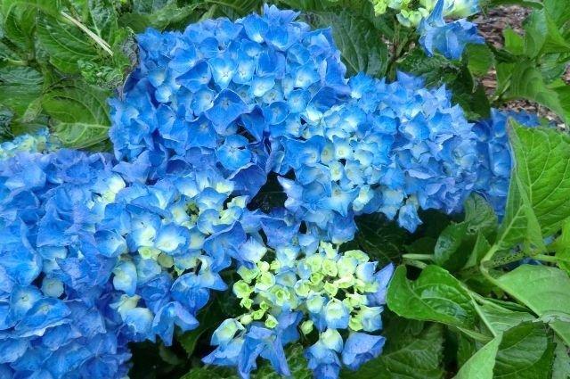Famosos Luara Presentes - Cestas, Flores e Presentes Criativos: Flores e  RU13
