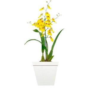 Orquideas são excelentes plantas para levar harmonia para sua casa