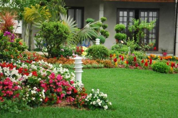 Saiba como escolher plantas para o seu jardim for Plantas en jardines pequenos