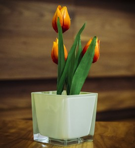 Como cuida de tulipas - tulipas laranjas