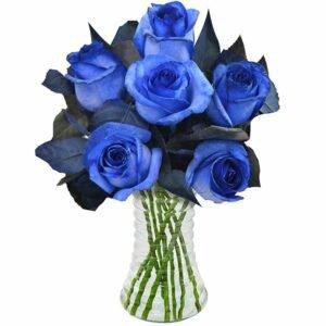 cuidados-com-as-rosas-azul