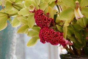 Conheça algumas Flores Exóticas