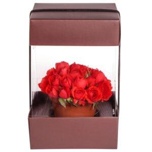 regas-floracao-mini-rosas