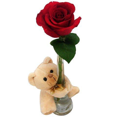 Rosa Colombiana e Urso de Pelúcia