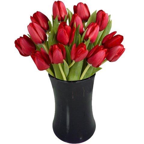 Simbolismo e encanto saiba tudo sobre tulipas - Tulipas para ventiladores de techo ...