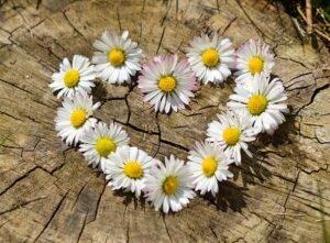 Flores Afrodisíacas
