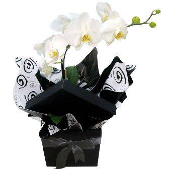 Glamurosas Orquídeas