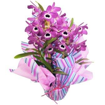 Orquídea Dendrobium Plantada