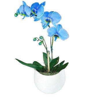 Orquídea Plantada Azul