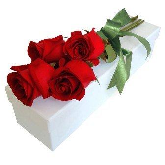 Paixão de Rosas Colombianas Vermelhas