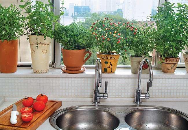 Aprenda a como decorar a cozinha com flores for Huerta de aromaticas en macetas