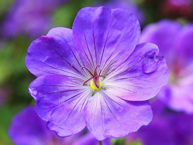 violeta01