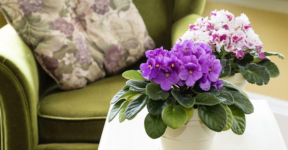 violetas-na-decoracao