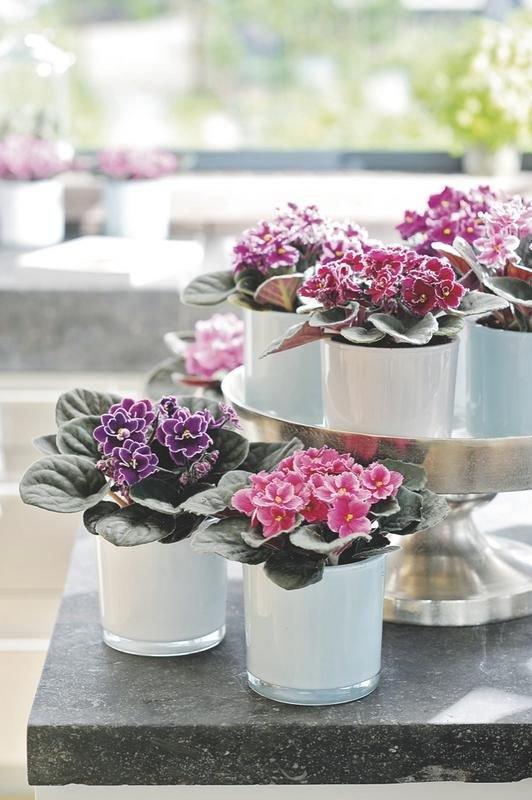 violetas-no-vaso