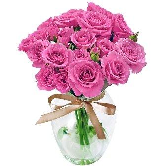 Contagiar de Rosas Purple