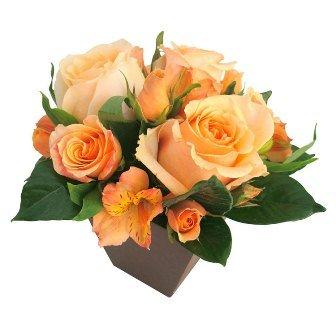 O Segredo da Flor Champanhe