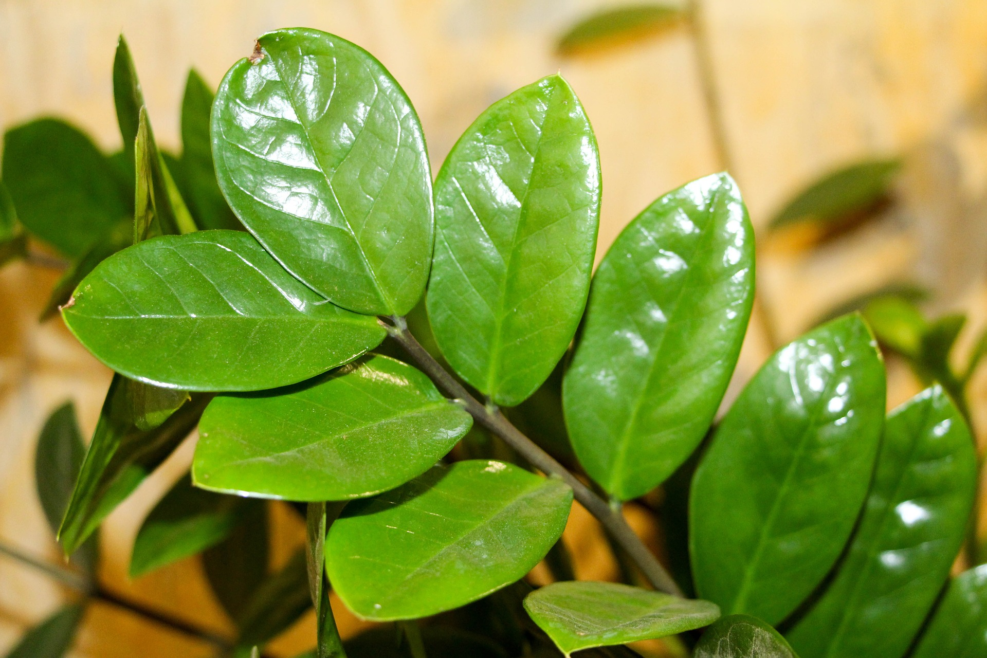 Plantas de sombra quais s o e como cultiv las blog - Plantas verdes exterior ...