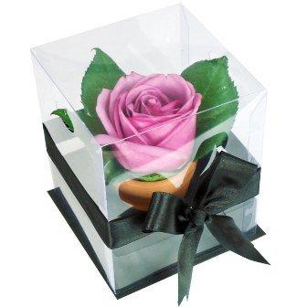 Rosê Lilás