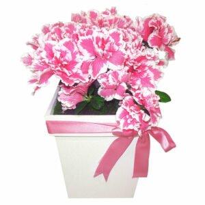significados-das-flores-azaleia-rosa
