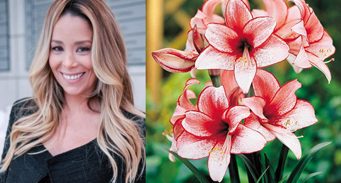 Amarilys personagem de Danielle e a Flor Amarílis