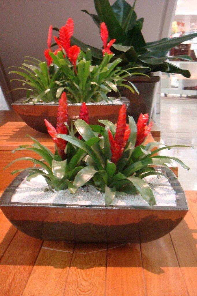 Saiba como cultivar as lindas brom lias - Tipos de plantas de interior ...