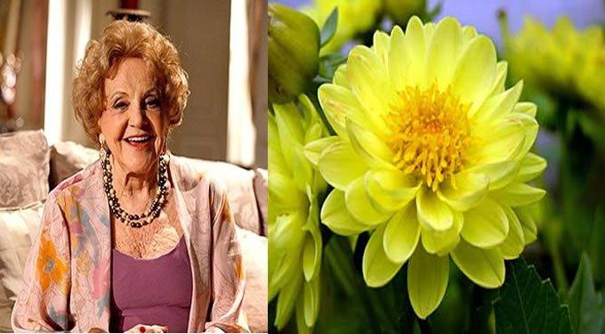 Eva Todor como Dália e a Flor Dália Amarela