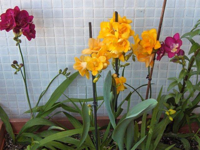 flores do meu jardim kraftaPics Photos – Blogue De Flores Flores Do