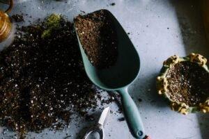 Saiba-identificar-o-momento-certo-para-trocar-uma-planta-de-vaso