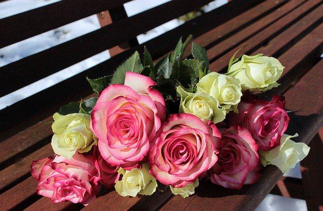presentear com rosas