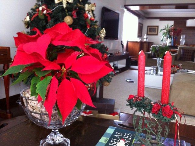 Decoração de Natal com bico-de-papagaio