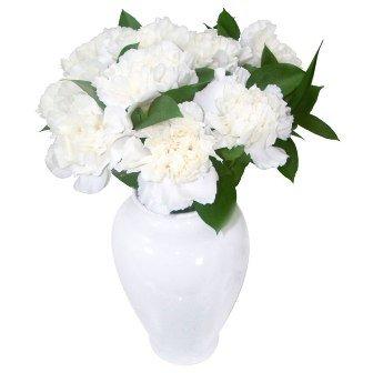 Elegantes Cravos Brancos