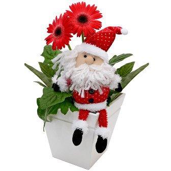 Gérberas do Noel