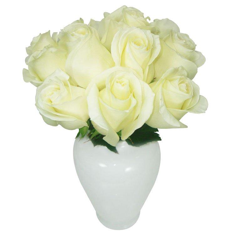 Serenata de Rosas Branco