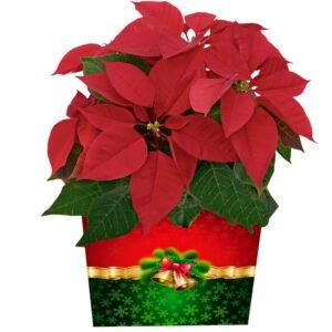 Arranjos de Natal - Tradicao de Natal