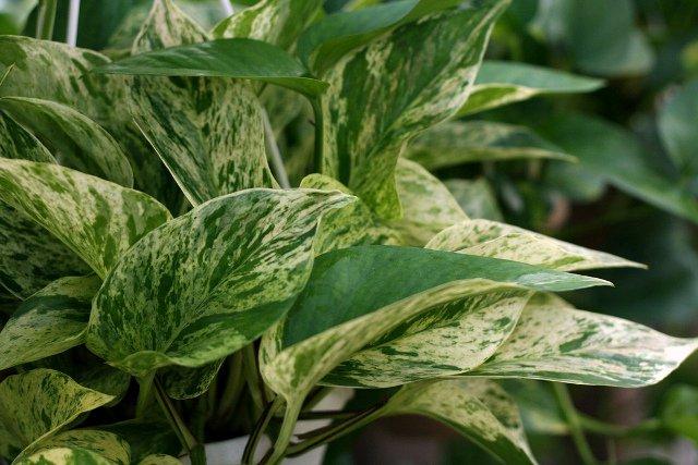 Conhe a as plantas para ambientes fechados - Como cuidar las plantas de exterior ...