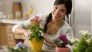 plantar-vaso-de-flor