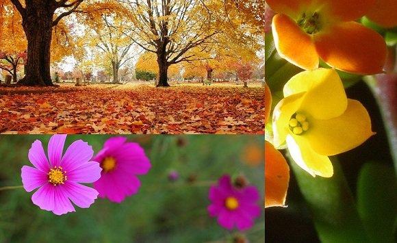 flores para jardim de outono ? Doitri.com