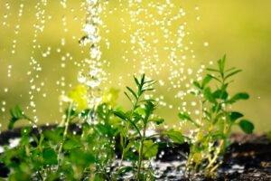 Veja como regar as plantas de forma sustentável