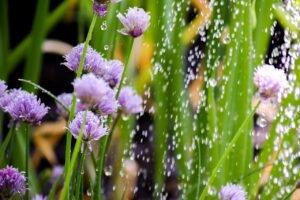 Saiba como regar as plantas de forma sustentável