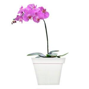 vasos-de-flores-orquideas