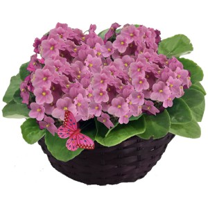 Como podar as plantas - Jardim de Violetas Rosas