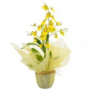 jardim-familiar-orquidea